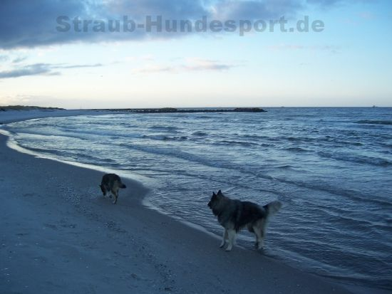 urlaub mit dem hund straub hundesport r stet sie passend aus hundesportartikel. Black Bedroom Furniture Sets. Home Design Ideas